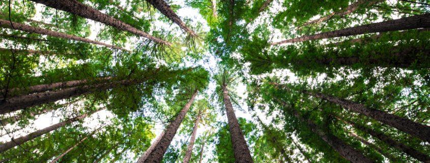 ODS, sostenibilidad, empresas, DIVEM